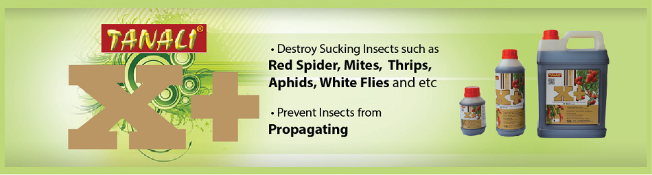 XPlus Malaysia | Destroy Sucking Insects Naturally Without
